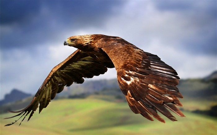 king of the skies-Animal Widescreen Wallpaper Views:5581