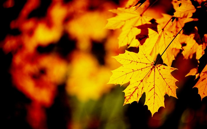 Golden autumn landscape Desktop Wallpapers Views:13508