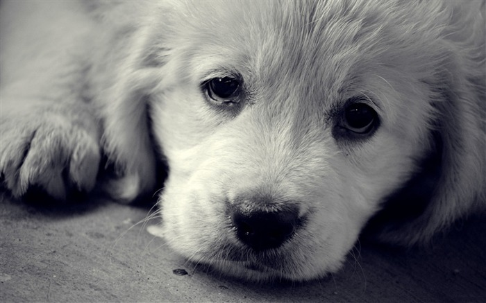 sad eyes-Animal Widescreen Wallpaper Views:12910
