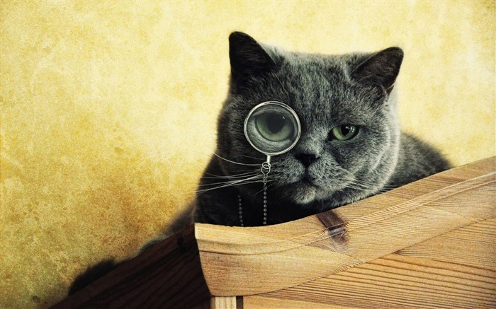 smart cat-Animal Widescreen Wallpaper Views:6806