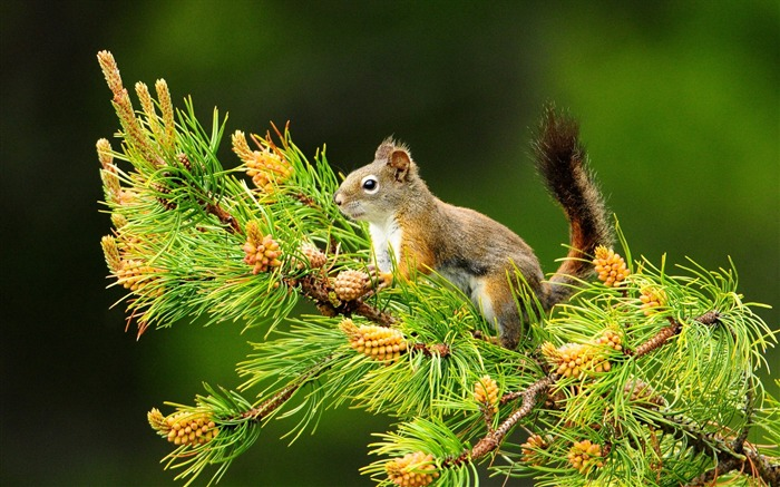 Forest Elf-cute squirrel HD Wallpapers picture 01 Views:5674