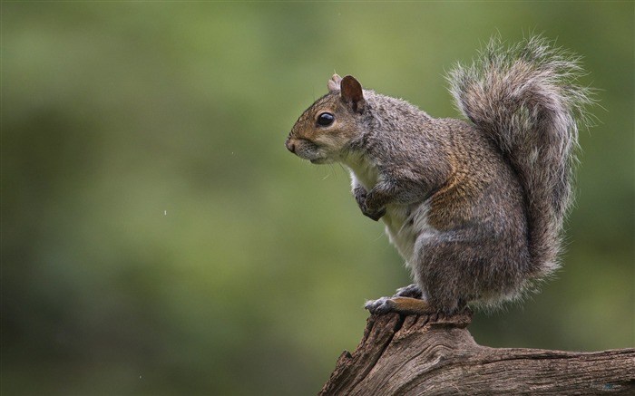 Forest Elf-cute squirrel HD Wallpapers picture 04 Views:3084