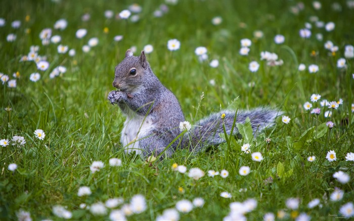 Forest Elf-cute squirrel HD Wallpapers picture 05 Views:4404