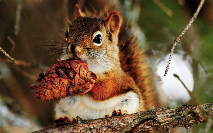 Forest Elf-cute squirrel HD Wallpapers picture 07 Views:4623