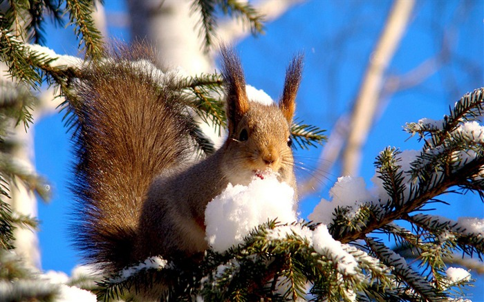 Forest Elf-cute squirrel HD Wallpapers picture 08 Views:3645