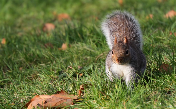 Forest Elf-cute squirrel HD Wallpapers picture 09 Views:4111
