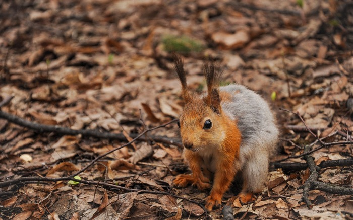 Forest Elf-cute squirrel HD Wallpapers picture 11 Views:3517