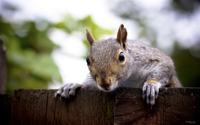 Forest Elf-cute squirrel HD Wallpapers picture 13 Views:3583