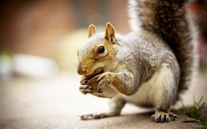 Forest Elf-cute squirrel HD Wallpapers picture 16 Views:2697
