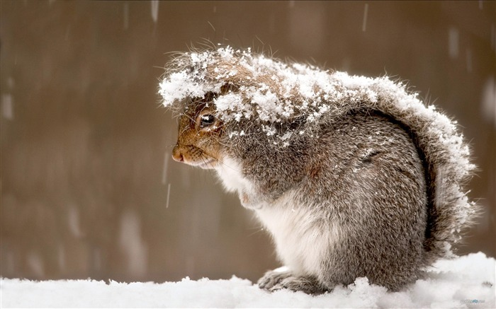 Forest Elf-cute squirrel HD Wallpapers picture 17 Views:5525