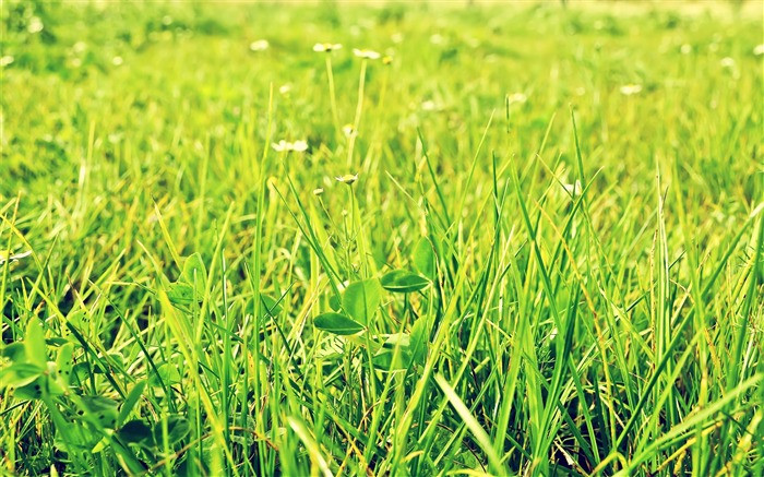 Green Pastures-Small fresh landscape wallpaper Views:9952