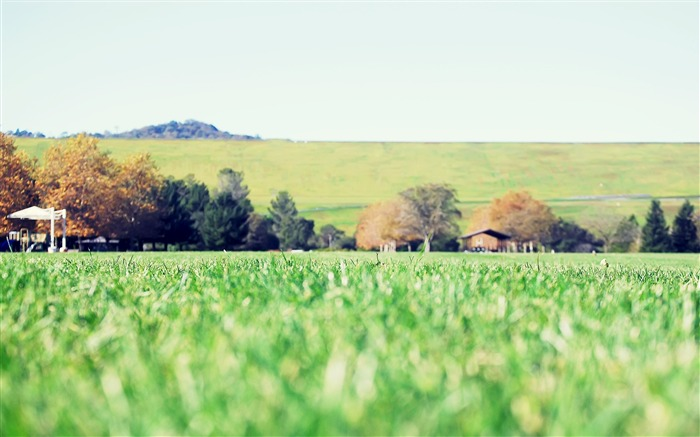 Green grass-Small fresh landscape wallpaper Views:4720