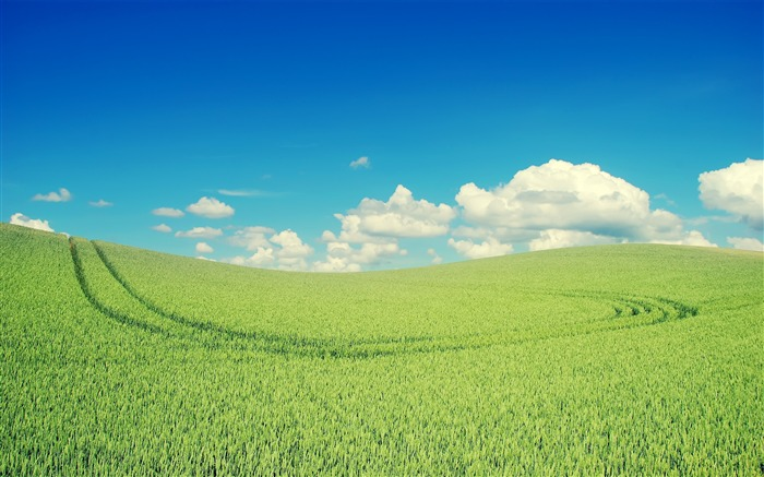 Green wheat field-Small fresh landscape wallpaper Views:12837