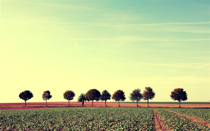 Lined up-Small fresh landscape wallpaper Views:4305