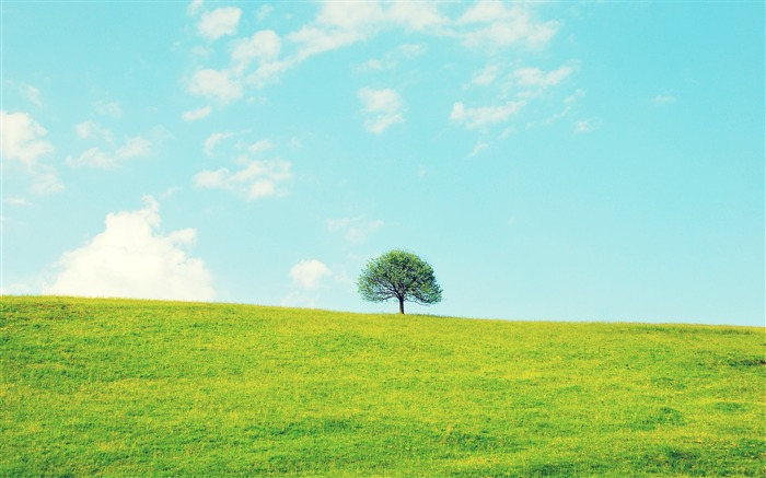 Lonely little tree-Small fresh landscape wallpaper Views:12264