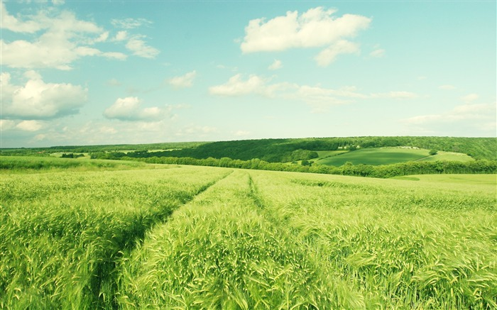 Wheat fields of Burgundy France-Small fresh landscape wallpaper Views:13169