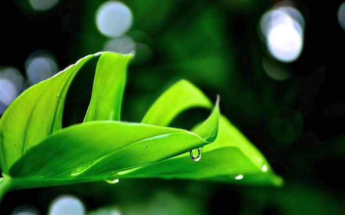 droplet on leaf-2012 Natural plant Featured wallpaper Views:3066