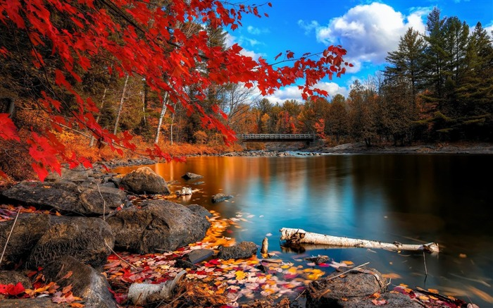 Forest Lake Nature Scenery Wallpapers View Wallpaper
