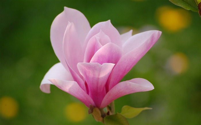 2012 Beautiful flowers photography featured Wallpapers Views:7877