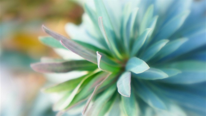 teal flower close up-Flowers and plants wallpaper Views:11146