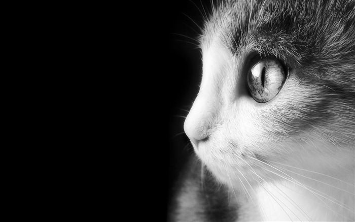 Cute Cat Eye-Animal Wizard photography wallpaper Views:14839