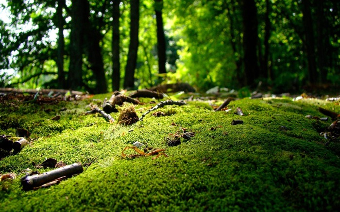 Forest Moss Green-2012 Macro Photography Featured Wallpaper Views:18517