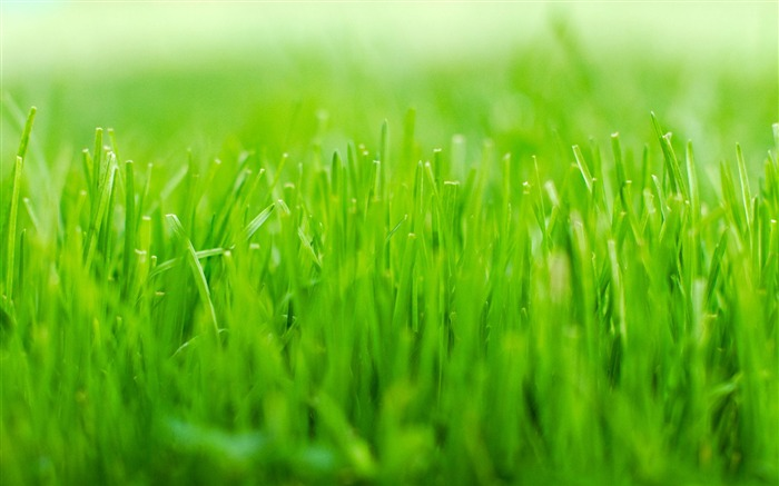 Green grass macro-Ubuntu 10-04 LTS official beautiful Desktop Wallpapers Views:7478
