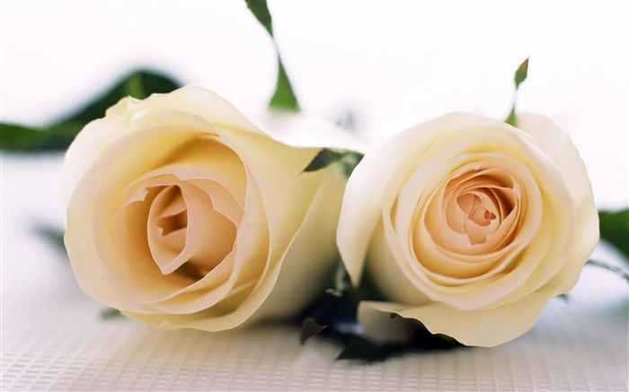 White Roses-Flowers Widescreen Wallpaper Views:5646