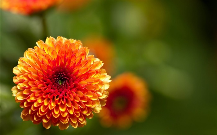 intense-2012 beautiful Flowers wallpaper Views:4934