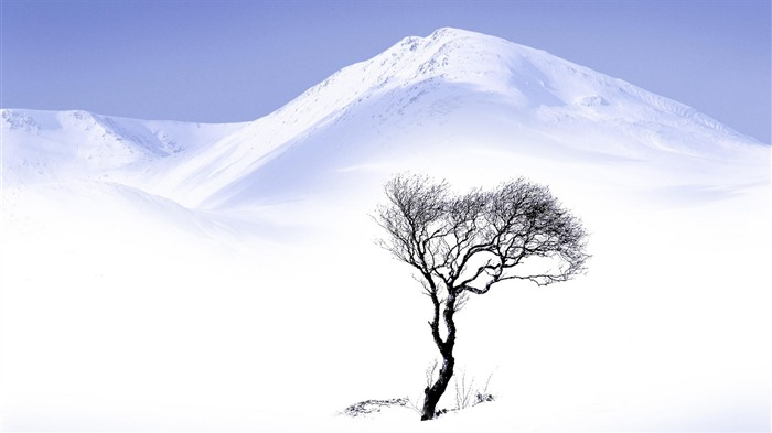 single tree and white snow-beautiful winter landscape wallpaper Views:4371