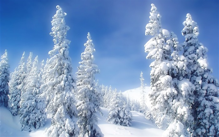 snow on trees-beautiful winter landscape wallpaper Views:20064