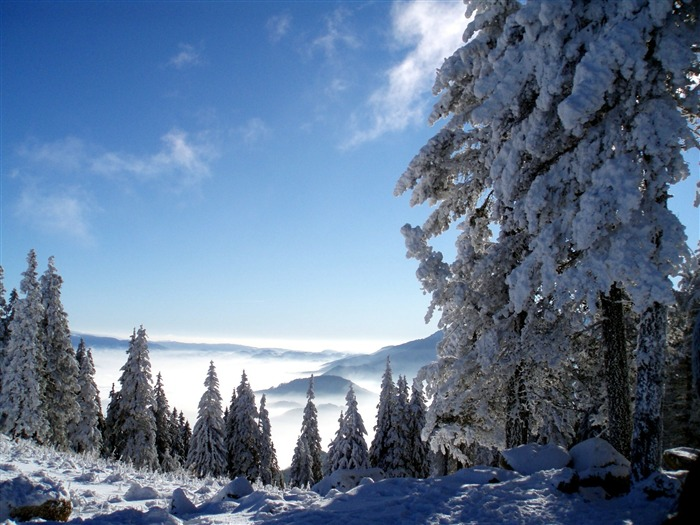 trees and snow-beautiful winter landscape wallpaper Views:7580