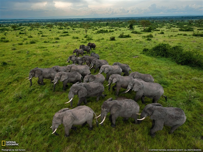 Elephants Uganda-National Geographic Best Wallpapers of 2012 Views:7182