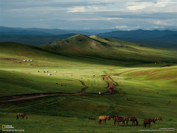 Horses Mongolian Steppe-National Geographic Best Wallpapers of 2012 Views:21398