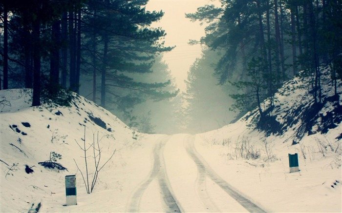 car snow tracks through the forest road-winter natural landscape wallpaper Views:7726