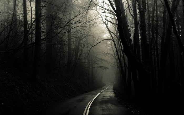 dark road through woods-amazing natural scenery wallpaper Views:36122