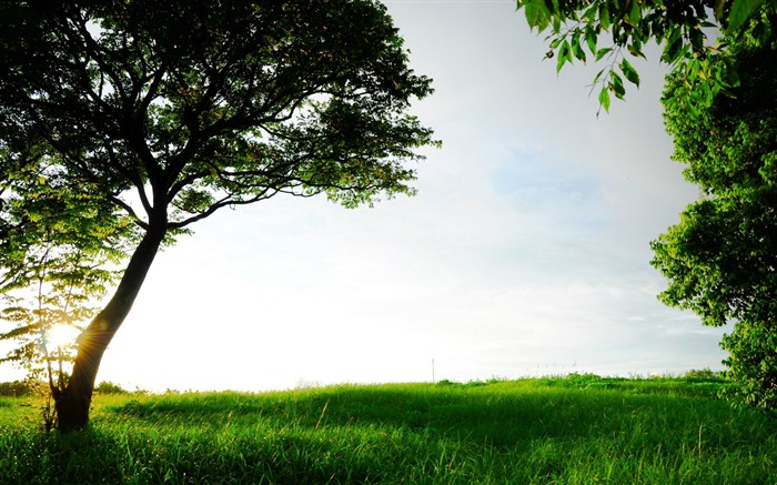 green grass and trees-Beautiful scenery wallpaper Views:5496