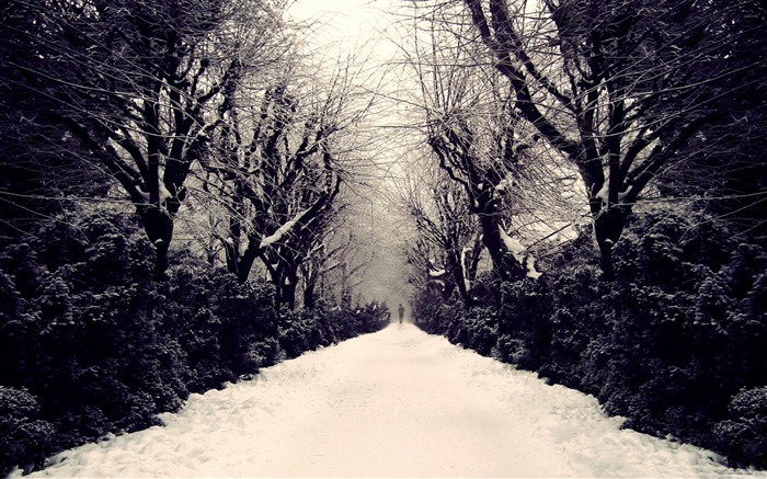 park alley-winter natural landscape wallpaper Views:4596