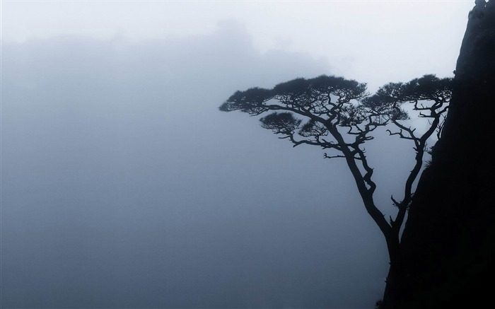 tree on a mountain side-amazing natural scenery wallpaper Views:2190