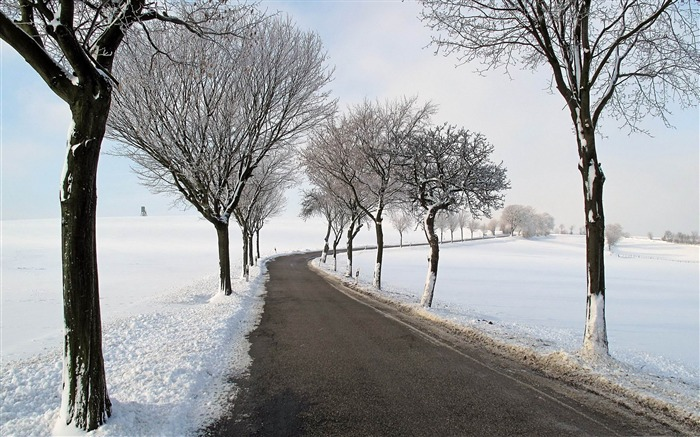 winter road trees-winter natural landscape wallpaper Views:3795