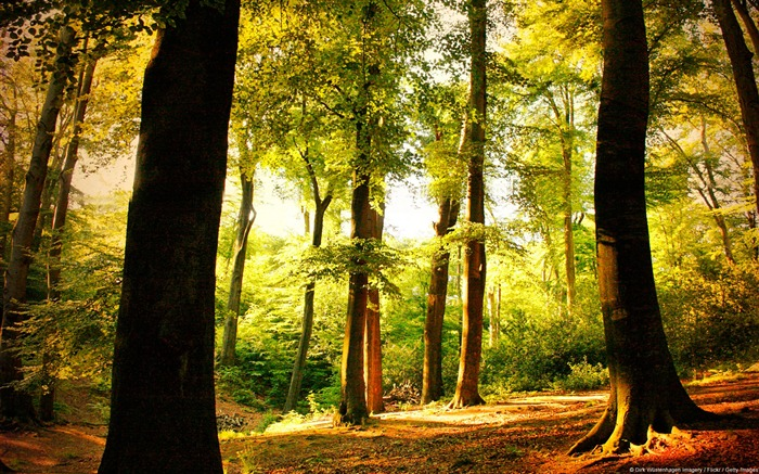 Beech trees forest Wuppertal Germany-natural landscape HD wallpaper Views:11439