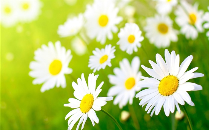 Gorgeous spring flowers HD widescreen wallpaper Views:16468