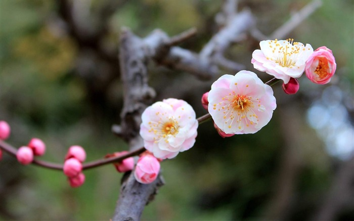 Warm Spring-flowers photo widescreen wallpaper Views:11621