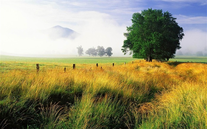 foggy field-natural scenery widescreen wallpaper Views:4197