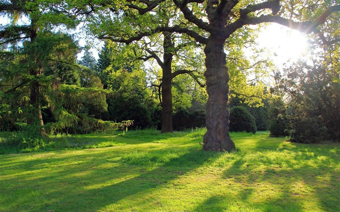 oak tree in the park-natural scenery widescreen wallpaper Views:14929