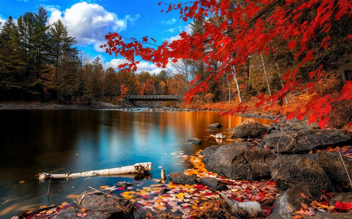 oxtongue rapids-Natural scenery HD Wallpaper Views:12109