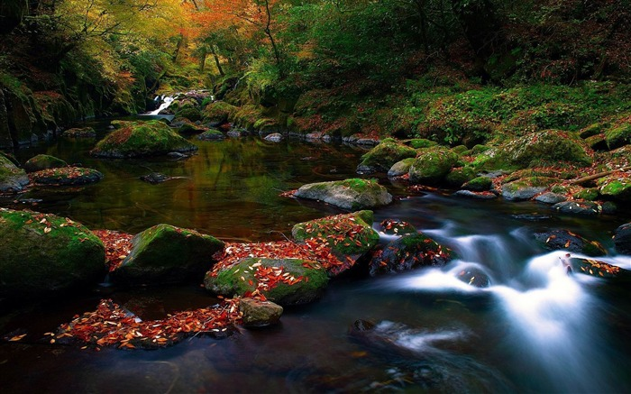 stream in the jungle-natural scenery widescreen wallpaper Views:3076