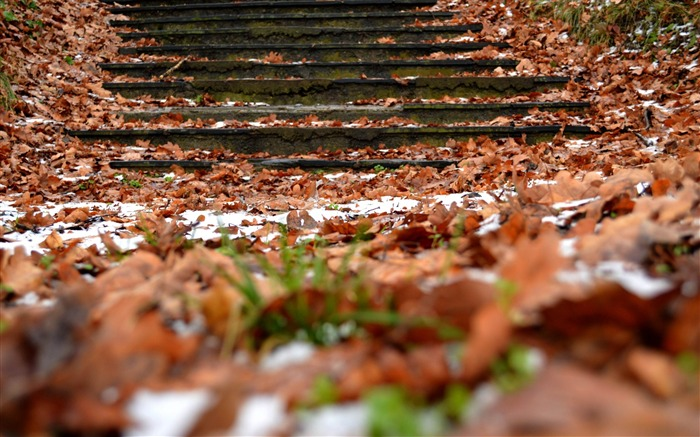autumn steps foliage snow-Natural landscape HD wallpaper Views:3807