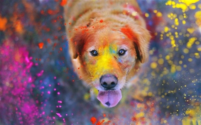 colorful dust-Animal World HD wallpaper Views:5038