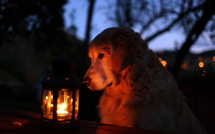 dog lantern light shadow-Animal HD wallpaper Views:4382